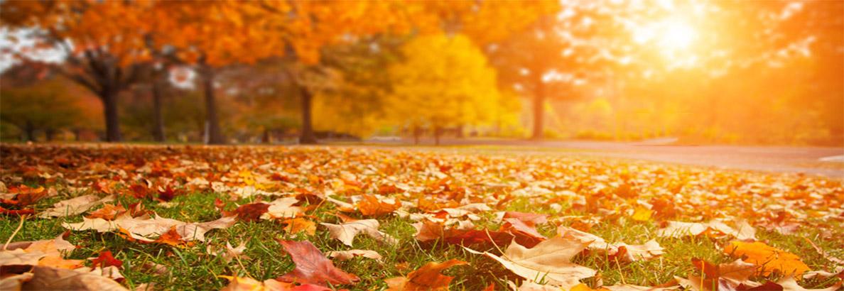 بنر فصل پاییز